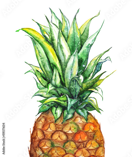 Watercolor hand drawn pineapple exotic tropical fruit isolated - 119371634
