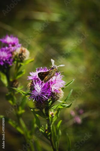 Zdjęcia na płótnie, fototapety, obrazy : butterfly and bee on  flower