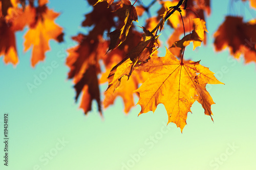 autumn leaves on sky Poster