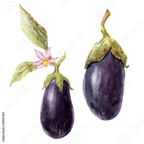Watercolor hand drawn eggplant