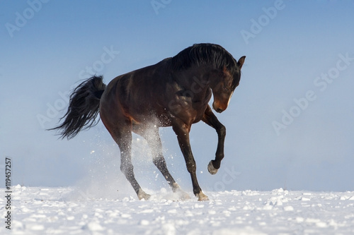 Obraz Fotograficzny Funny horse on snow field against blue sky