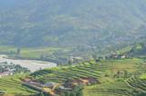 Beautiful Terraced Rice Fields in Punakha, Bhutan