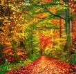 Farbenfroher Wald im Herbst lädt zu einem Spaziergang ein