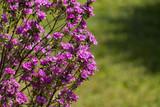 arbusto fiorito-Exposure
