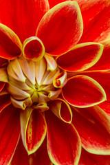 Rote Blüte © Alexander von Düren