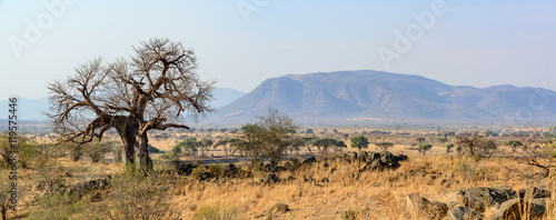 Landscape with Baobab (Adansonia digitata). Ruaha National Park. Tanzania