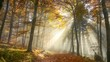 Langsame Kamerafahrt durch zauberhaft beleuchteten nebligen Wald im Herbst