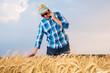 A farmer inspects a wheat field