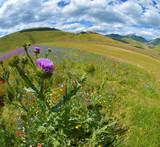 Panorama - Vallata di Castelluccio di Norcia - Fioritura
