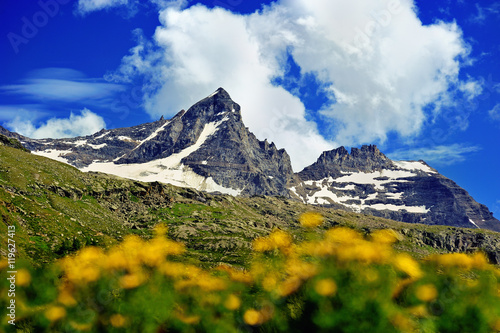 Poster great Alps mountains with yellow flowers