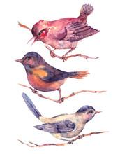 Conjunto de acuarelas de colores pájaros aislados en blanco