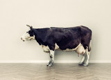 the cow in a room