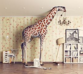 giraffe in the living room