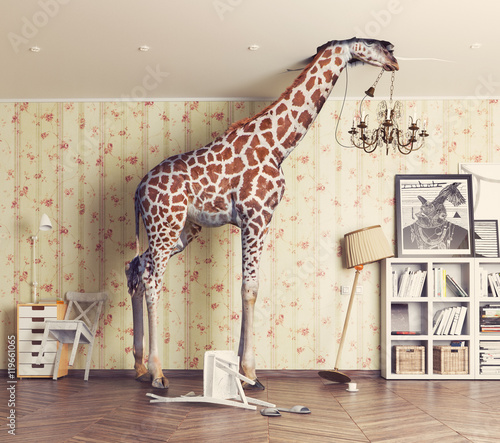 giraffe in the living room