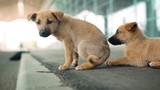 Close up view of cute puppies lying on street. Slow motion.