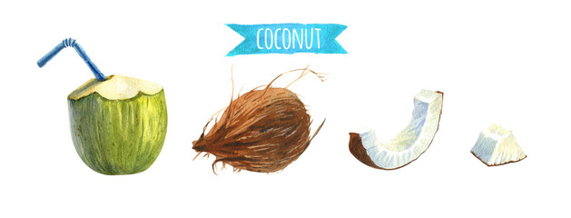 Coconut set, watercolor illustration with clipping paths © Olga Serova