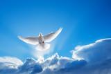 White Dove symbol of faith - 119724481