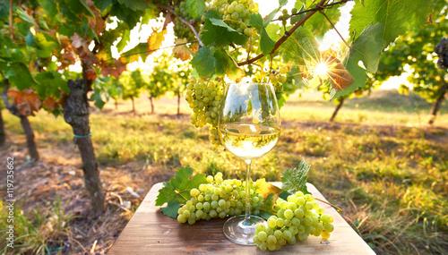 Weinglas im Sonnenlicht, Herbst im Weinberg