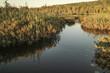 Marsh Trail in the Upper Peninsula
