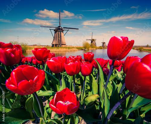 Fototapeta The famous Dutch windmills.