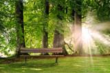 Sitzbank im Wald.  - 119829212