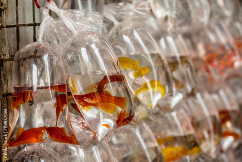 Exotic fishes at the Hong Kong Goldfish market - 3 Poster