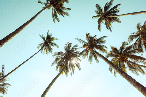 Palm trees at tropical coast with vintage toned