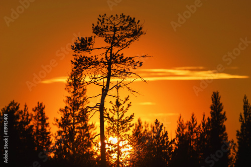 Poster Oranje eclat Sunset in a forest