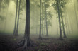 green fog in woods