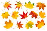 Fototapety Bunte Herbstblätter Collage vor weißem Hintergrund