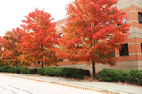 red autumn trees in a row at road side outside company building