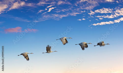 Obraz Landscape during sunset with flying birds panoramic view