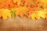 Maple leaves on sack background