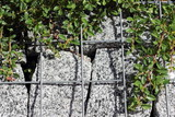 Wall made of natural stones with green plants