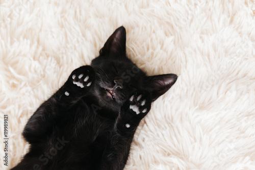 Kitten sleeping on carpet