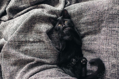 Poster Kitten on blanket