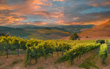 Rows of vineyard among hills on sunset