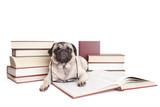 lieve kleine hond, mopshond, omringd door boeken kijkt verstoord op uit boek met leesbril om nek, geisoleerd op witte achtergrond