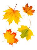 Fototapety Buntes Herbstlaub vor weißem Hintergrund