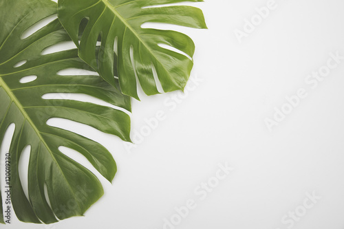 Foto Murales Large green tropical leaf from the monstera plant