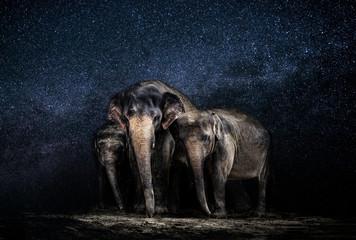 Rodzina słoni na tle gwieździstego nieba