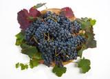 uva nera di Lambrusco