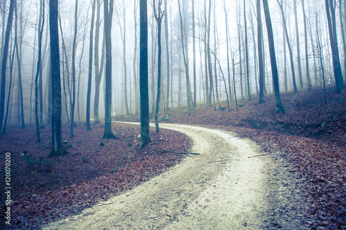 Mystic foggy autumn seasonal forest road with trees.