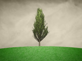 Single branched cypress tree with green colored leaves. Tree render filter used.