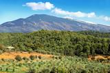 Terroir de Provence sous le mont Ventoux - 120070488