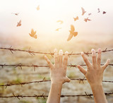 Woman hands hold the rusty sharp bare wire with hope longing for freedom