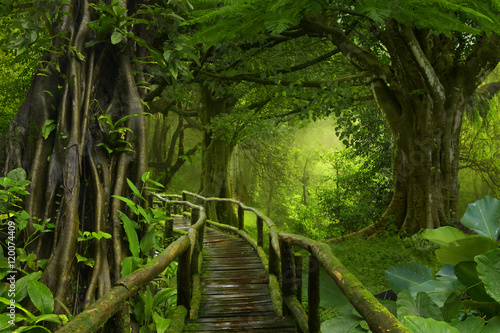 Fototapete urwald  Dschungel Fototapete günstig kaufen | Fototapeten | Bildtapete ...