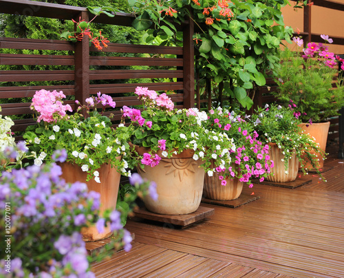 Flower pots on wooden terrace - 120077071