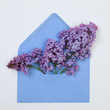 Lilac  flowers in a blue envelope on white background