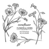 cornflower vector set